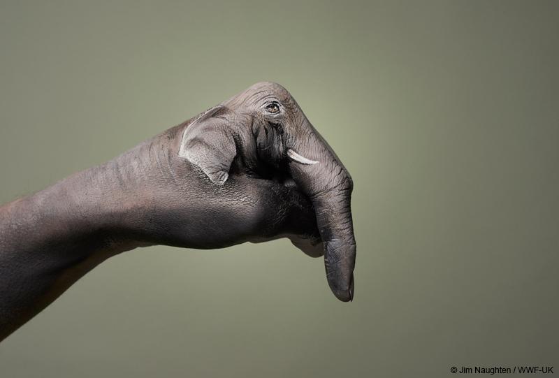 Elephant hand art